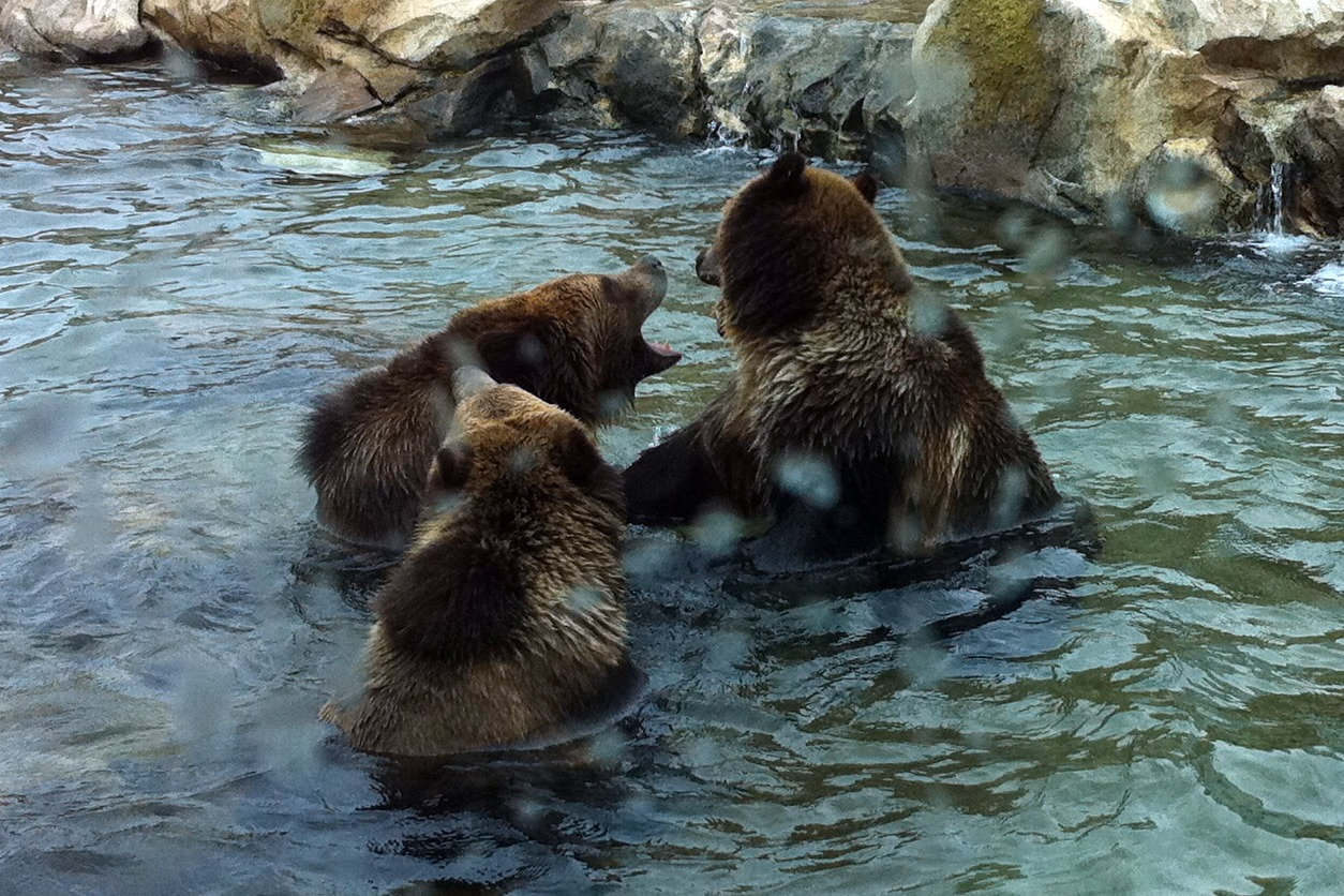 Wild Backyard Animals : Backyard Animals Related Keywords & Suggestions  Backyard Animals