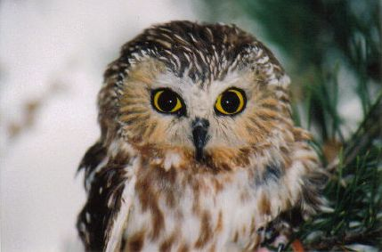 whooooo is the cutest owl kelly s lucky you