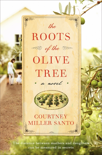 roots of the olive tree
