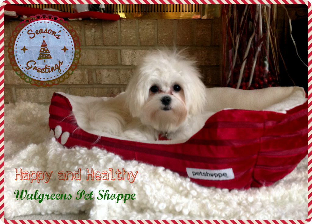 Walgreens-HappyAllTheWay-Pet-Shoppe-Creative-Gift-Ideas-Shop