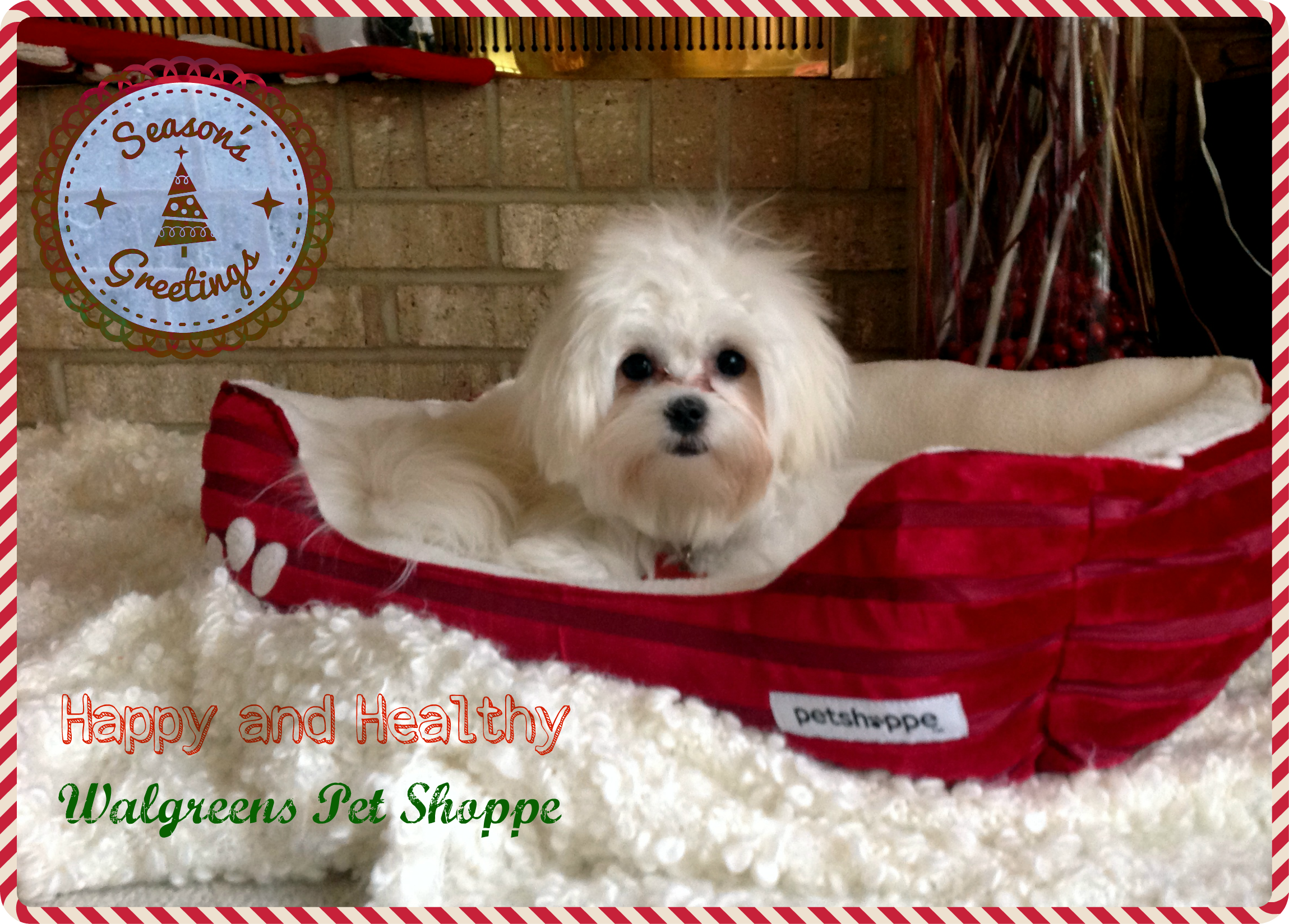 Top Five Christmas Present Ideas for Your Favorite Pet or Someone ...