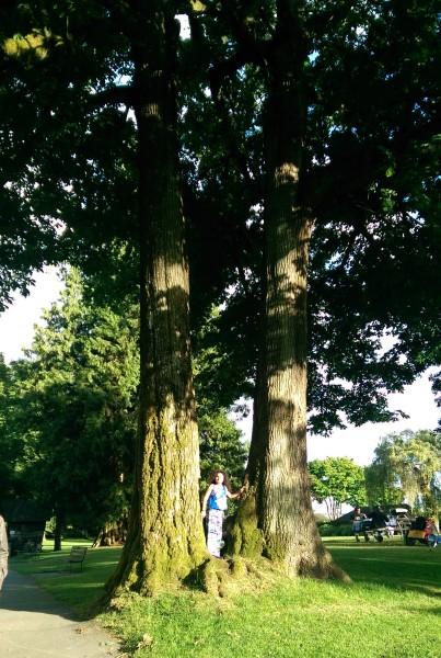 AAA0239 Stanley Park Trees