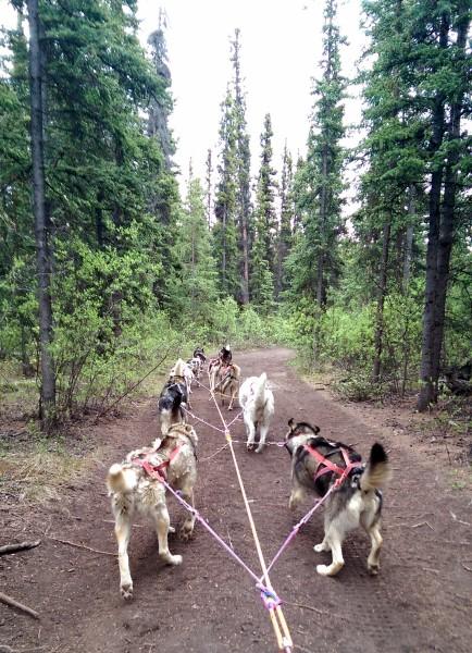 AAA0107 Sled Dogs