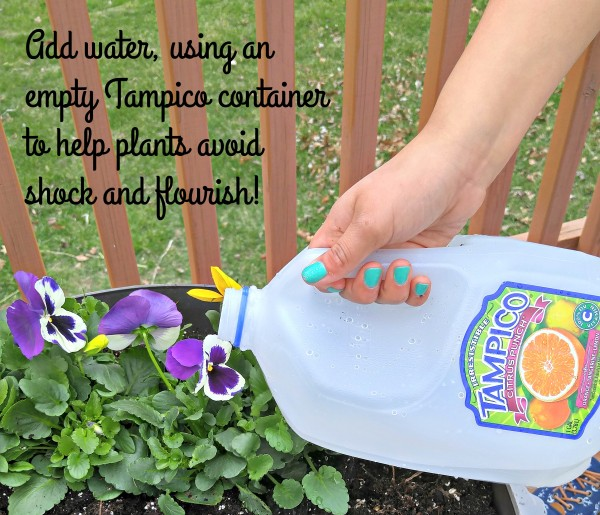 #LoveYourColorfulWorld Tampico Juice container to add water planting flowers