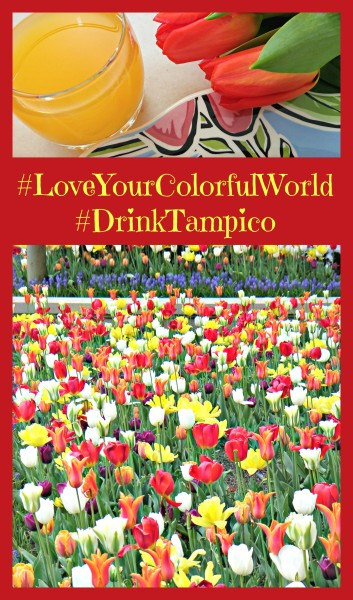 #LoveYourColorfulWorld Tulips Tampico