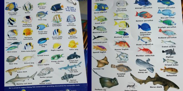 Discovery Cove Fish Varieties #TheMoms