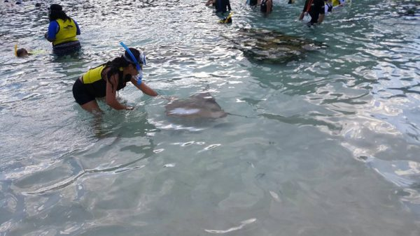 maya touching sting ray